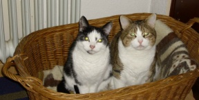 cats in wicker basket