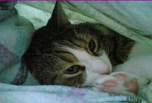 the cave cat under the blanket
