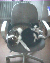 2 cats cuddling on office chair
